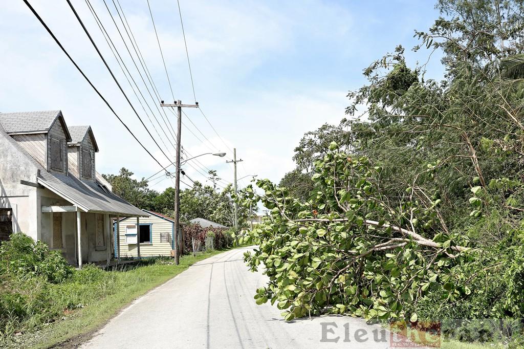 Tree fallen across the road in The Bluff.