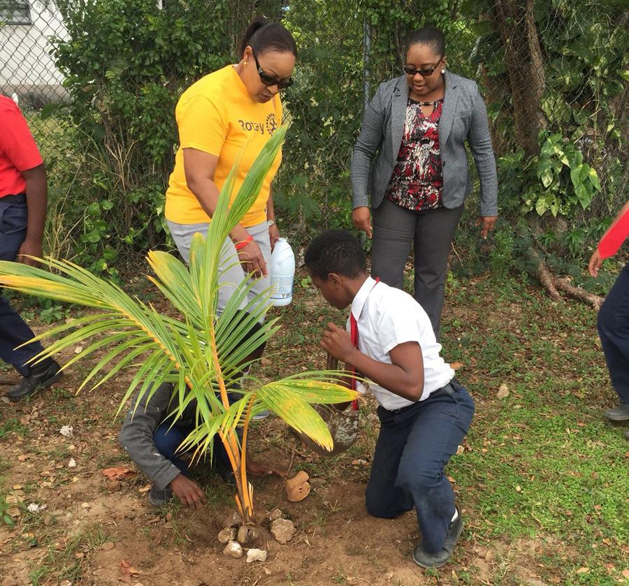 Treeplanting1
