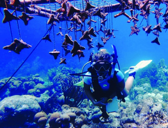 CEI Researcher Lily Haines dives among home-made substrates that baby corals will soon settle on.