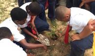 treeplanting2